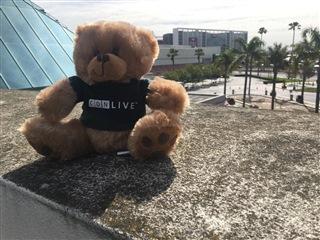cdnlive bear
