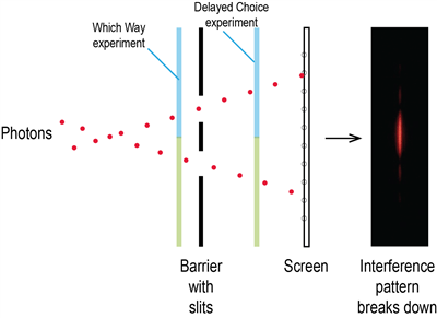 Which Way and Delayed Choice Experiment